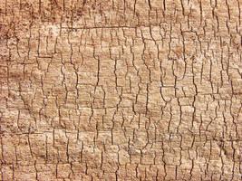 wood_text_v1 by hungarou