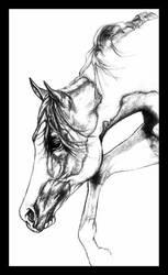 HA Stallion by darkangels280