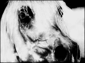 Arabian Closeup by darkangels280