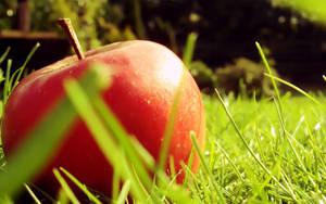 Fresh apple wallpaper by Thewinator