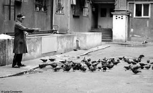 The bird feeder by LuciaConstantin