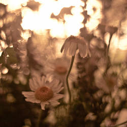 Midsummer IV by LuciaConstantin