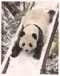 panda slide by chrissythecat