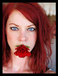 a red rose by Myana