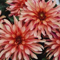 lovely flowers_9 by Marsulu