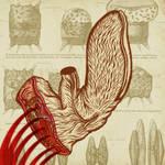 organismo no identificado by Atanasio