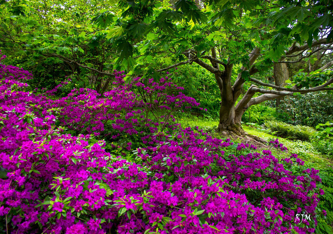 Longwood Gardens by robmurdock