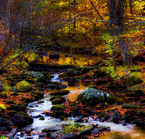 Upon a Golden Brook by robmurdock