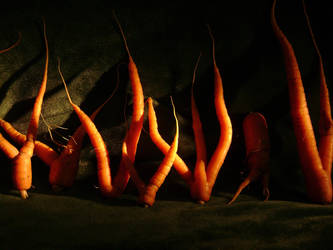 The Carrot Forest ... by Danou1