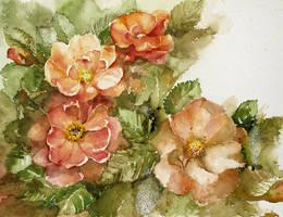 Christmas roses by modliszqa