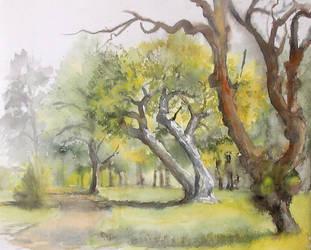 Wroclawski park by modliszqa