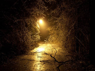 Beauty of Winter by funygirl38