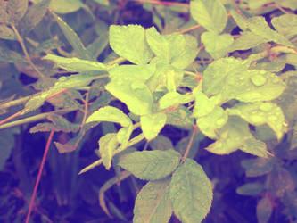 Leaves, after rain by pooribu