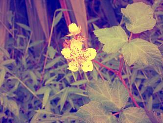 Lonely tiny flower by pooribu
