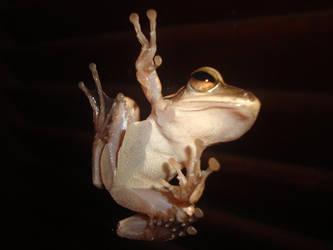 Frog by xSiana182x