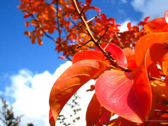 autumn sky by therealarien