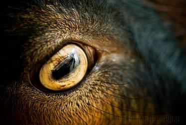 Eye by rgphoto777