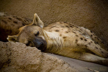 Naptime by rgphoto777