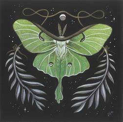 Luna Moth by JillHoffman
