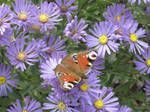 Butterfly on flowers by Hitodenashi23