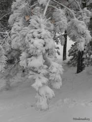Snow tree by Hitodenashi23