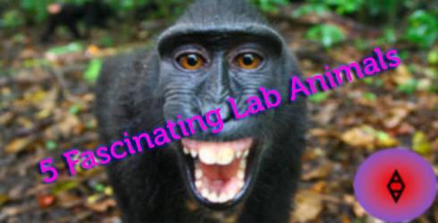 5-Fascinating-Lab-Animals by SireVoltz