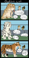 Oedipus Cat by SanjanaIndica