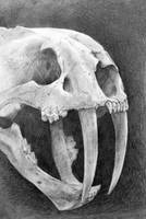 Smilodon Skull by Cooooookies