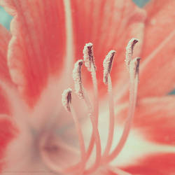 orange or pink by roveena
