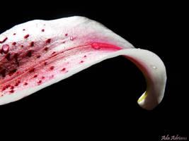 petal by ada-adriana