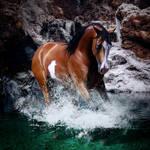 Arabian premade by Amibka89