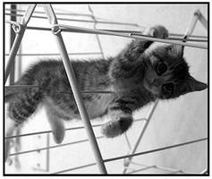 Zuco Hanging by shutterbabe2006
