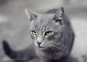 cat by Ursula-Gemma