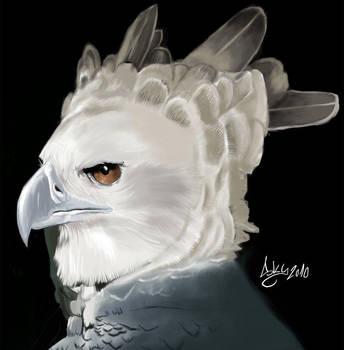 Harpy eagle by SkyMarius