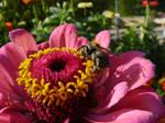 eating bumblebee2 by Celebryane
