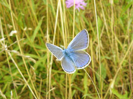 soooo blue by Celebryane