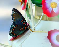 Butterfly on Feeder by wolfepaw