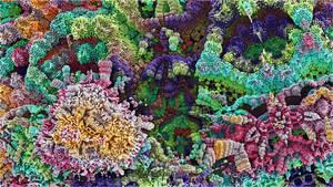 Bulb Coral by wolfepaw