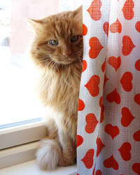 furball curtain - published in newspaper by sHavYpus