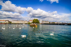 Clouds and swans in Geneva - to Ayhan by Rikitza