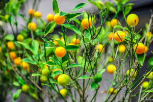 yellow and green in Japan by Rikitza