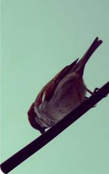 I hate birds ... by tItE-fRaIsE-tAgAdA