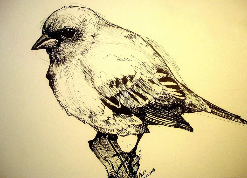 Bird Study by Kallopsia