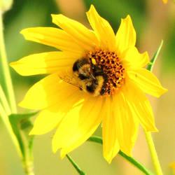 Garden Bee by TerrieSoberg