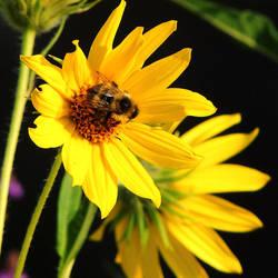 I Love Sunflowers by TerrieSoberg