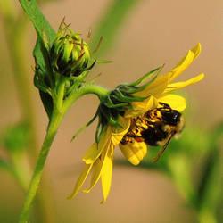 Pollen Collector by TerrieSoberg