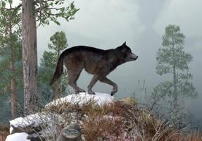 Winter Wolf by deskridge
