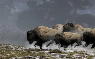 Bison Stampede by deskridge