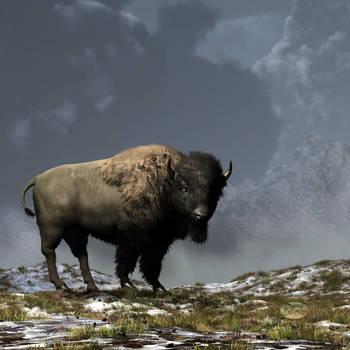 Lonely Bison by deskridge