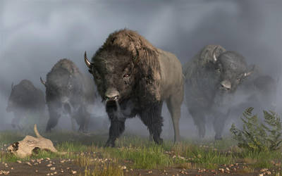 The Buffalo Vanguard by deskridge